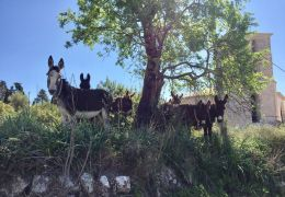 donkeys in arta